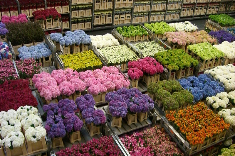Flower auction (Holland)